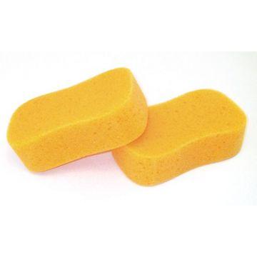 Sponge Wahlsten